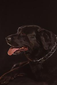45North_Dogs_0004