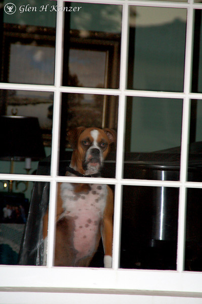 This dog scared the heck out of me, standing on his back feet just staring out the window at me.
