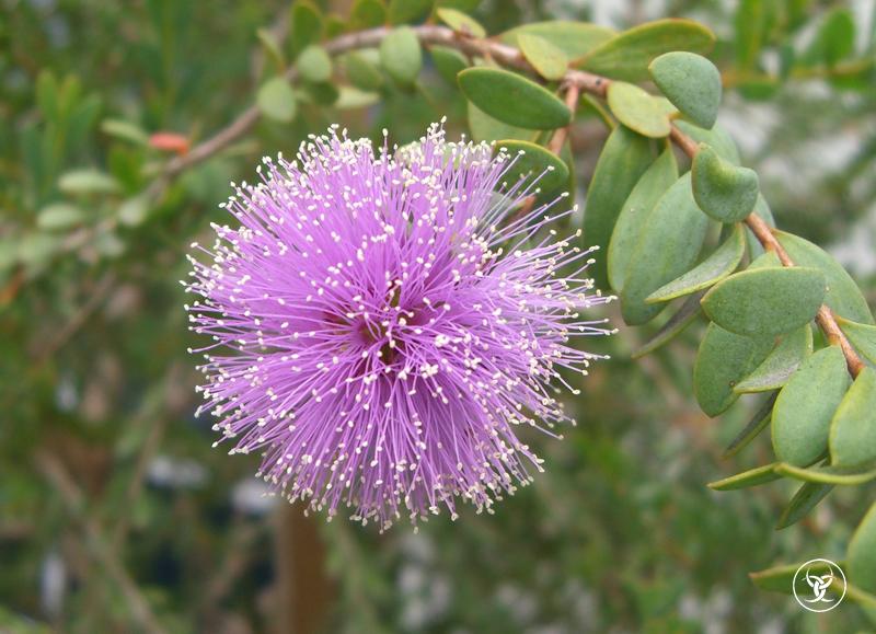 Alien Flower
