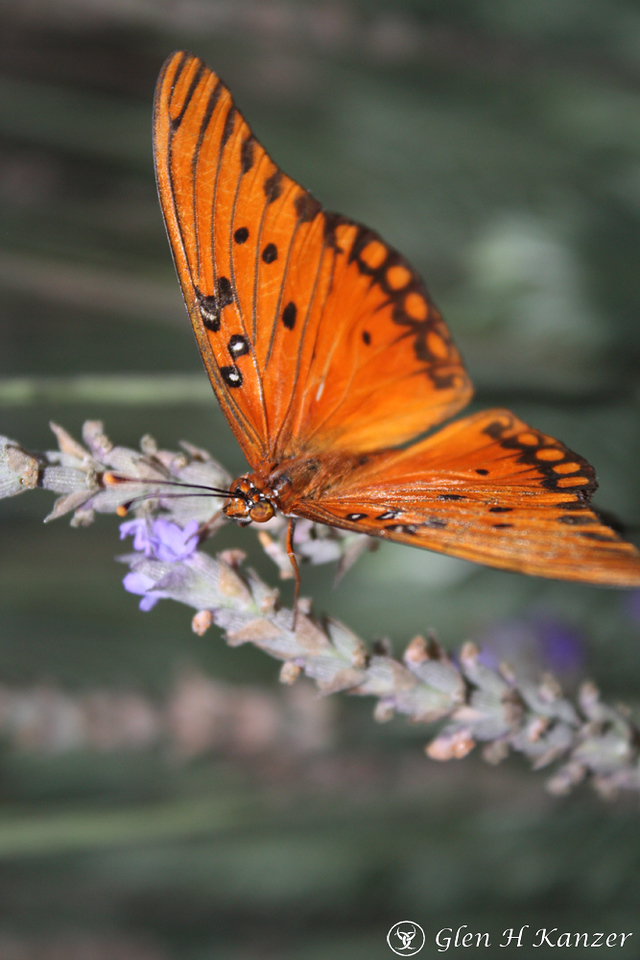 Butterfly - so delicate and so beautiful