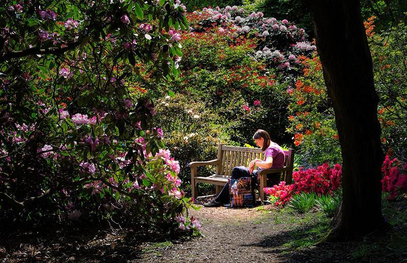 46 Quiet.  The original was taken at Wisley RHS Gardens - on a very busy Sunday - but a  Lighting Effects filter resulted in this rather peaceful scene among the azaleas and rhododendrons.