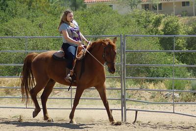 5/4/13 Campo Horses