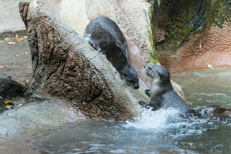 zoo 2014 -14