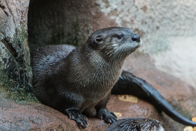 zoo 2014 -16