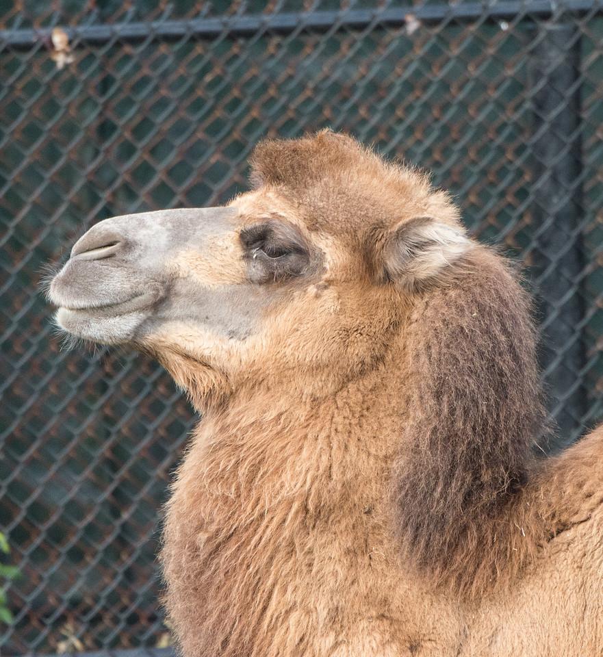 zoo 2014 -37