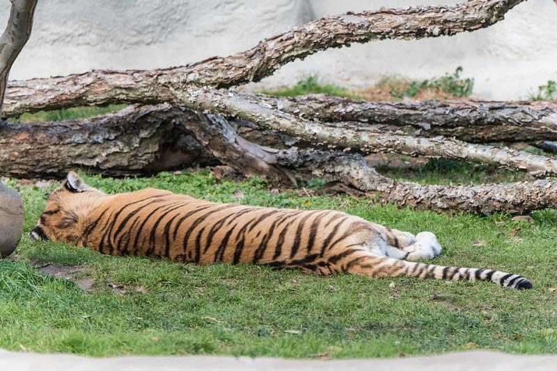 zoo 2014 -38