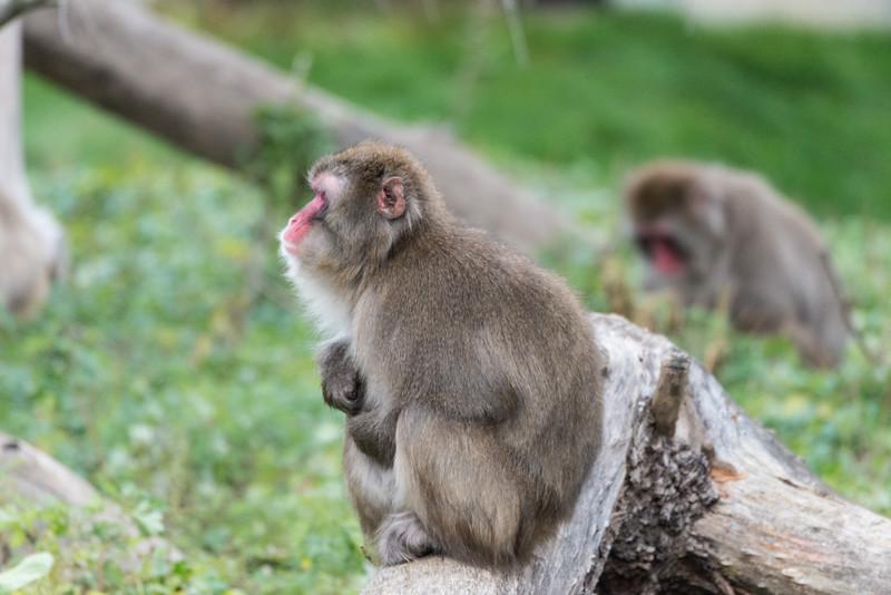 zoo 2014 -46