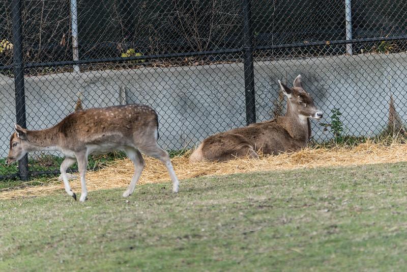 zoo 2014 -35