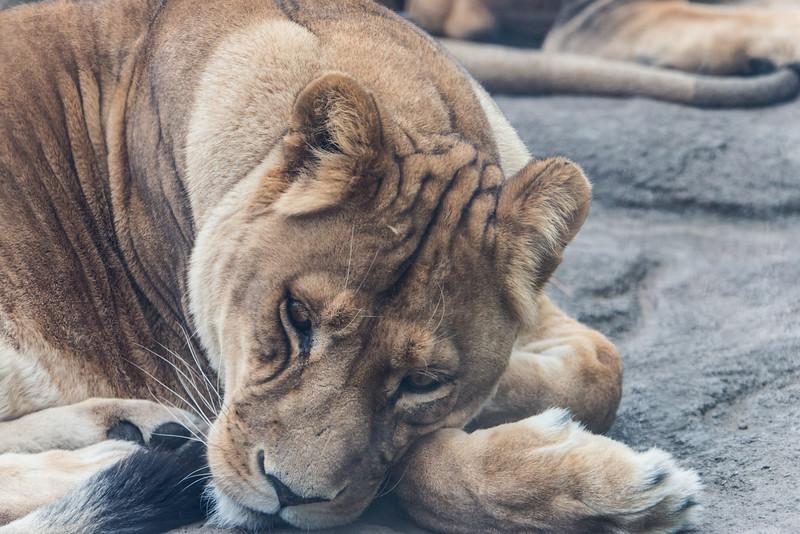 zoo 2014 -39