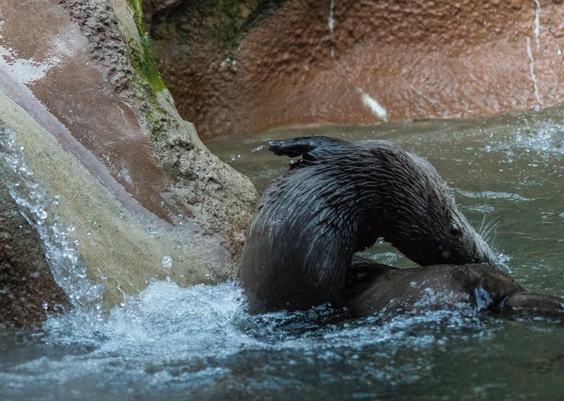 zoo 2014 -15