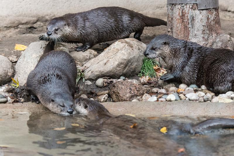 zoo 2014 -13