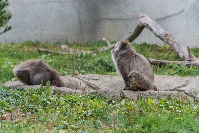 zoo 2014 -40