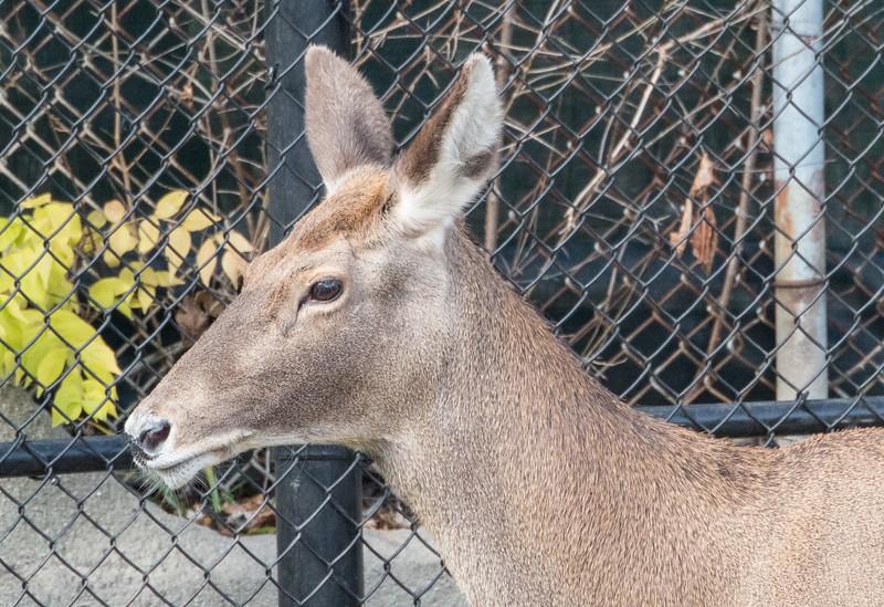 zoo 2014 -36