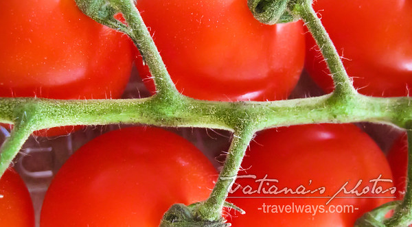 tomatoes-2a