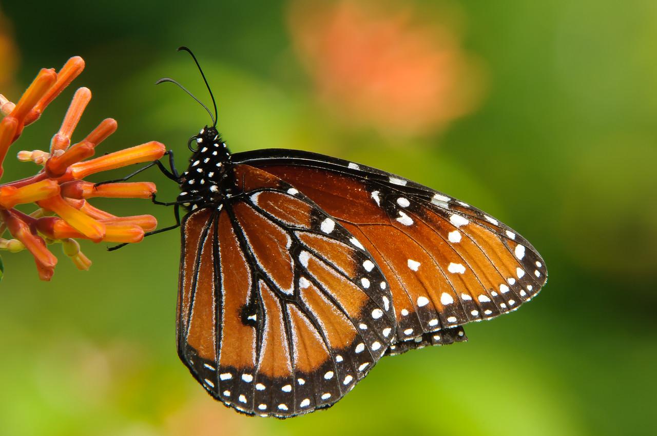 Butterfly Estates FMCC Field Trip