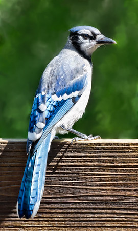 2013-07-21. B is for Blue Jay.  Thank you for taking the time to view and comment on my abstract. Sorry I wasn't around yesterday, can't seem to get rid of this kidney infection.