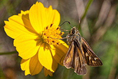 2013-10-09. Skipper.  Your comments and views are very much appreciated. Thank you!