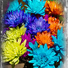 01-26-2013. Colorful flowers. Used a frame from PicMonkey. Note: My daughter-in-law had this bouquet in a vase on her kitchen table. This was their original color.  Thank you for your comments on my cupcakes yesterday!