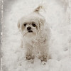 "02-16-2013. ""Okay Mom, I'm ready to come in"". This is Anabelle (Annie); 10 yrs. old and a whoppin' nine pounds!  Thank you for your comments on my waiting for spring snow photo yesterday!"