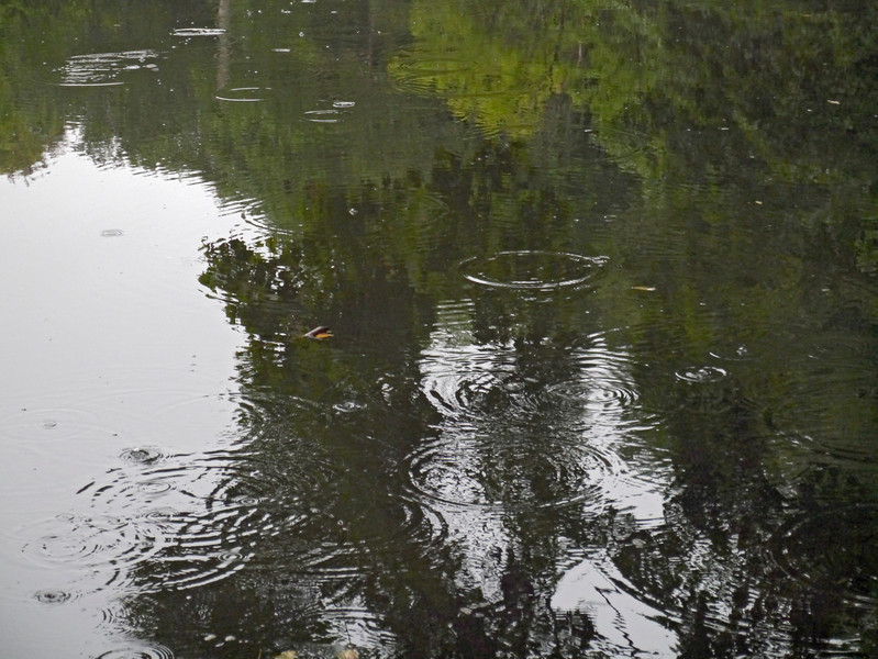Last night it rained, his morning was dreary, and I walked to the train station past this pond. It looked like it was raining under the trees but not under the sky. When I looked closer, I saw little fish eating stuff dropping from the trees. (9-4-12)
