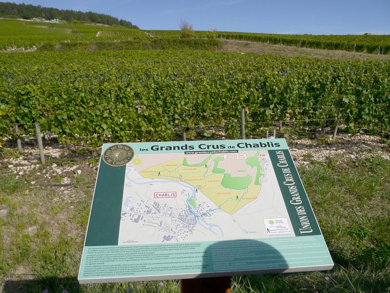 Chardonnay vineyard in Chablis, France (10-1-12)