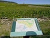Chardonnay vineyard in Chablis, France (10-1-12)