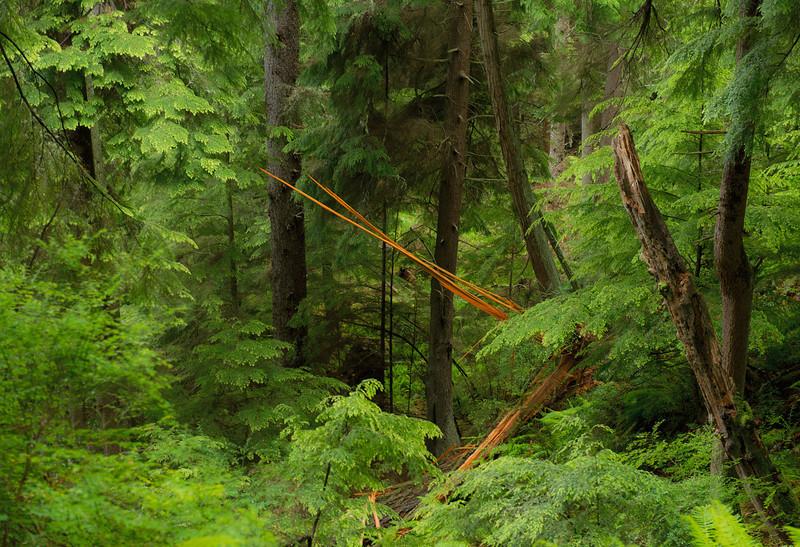 A Walk in Wilbert Woods