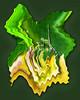 Lemon Flower Lure