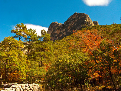 Fall color along McKittrick Canyon Trail, North America, USA, Guadalupe Mountain National Park, Texas