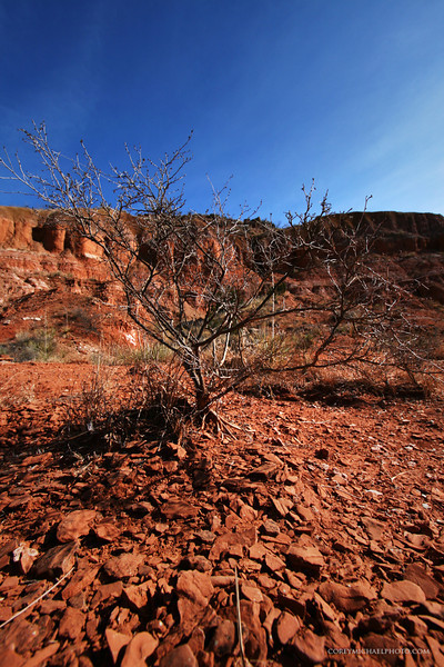little tree in Palo Duro canyon in Texas