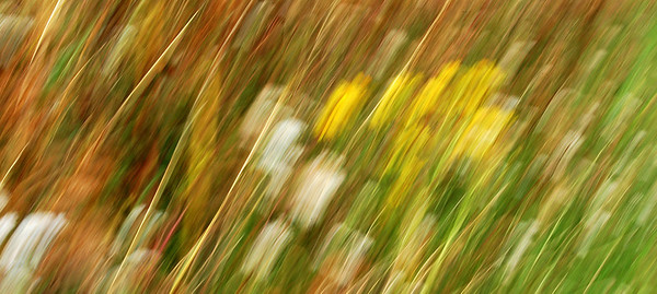 17.09.11 - Impressions of Wildflowers  Probably the last of my abstract experiments for now