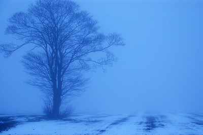 06.02.12 - Blue  Dusk in near freezing fog, very eerie, only a hundred yards from houses but all we could see was the tree in the field.  This is the same field and tree (on the left) on a clear day!  http://www.lightanddreamsphotography.com/Photography/DAILY-PHOTOS-FOURTH-YEAR/15791565_MXXcXB#!i=1690307101&k=2S8X9hd&lb=1&s=A