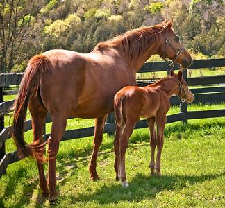 Cedar Ridge horses