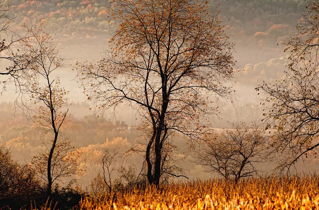 Coach Farm land, tree in autumn mist