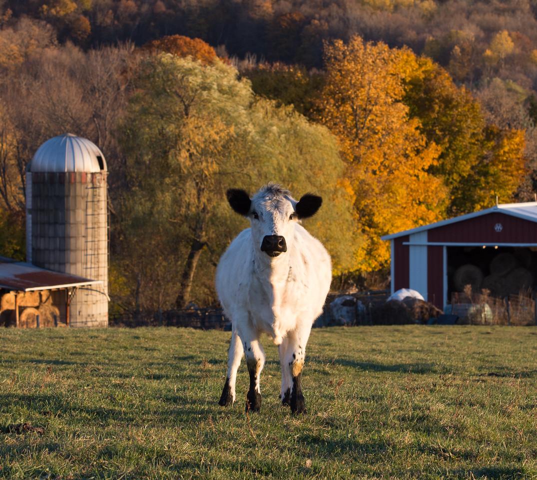 Fox Hill Farm-9