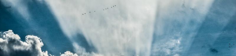 Geese flying through sun rays