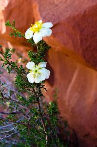 Arizona-4129