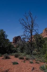 Arizona-3783