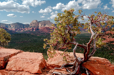 SEDONA TREE AND OVERLOOK