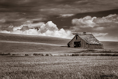 Quiet time in thePalouse
