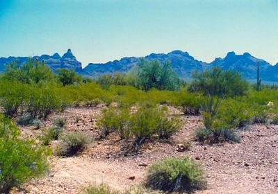Skull ?, Organ Pipe Cactus Natl Mon, AZ, apr 1989
