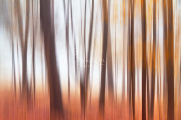 Foggy Forest Blur