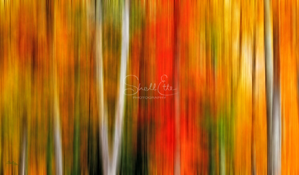 Assorted Maples Blurred