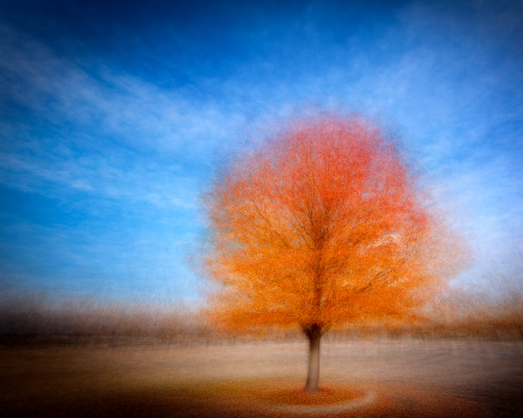 Autumn tree abstract in evening light