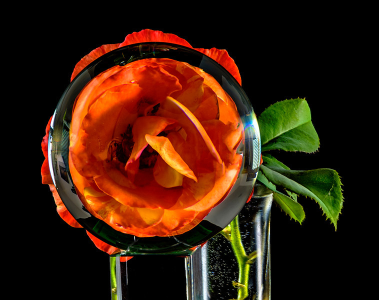 Orange rose seen through a crystal ball