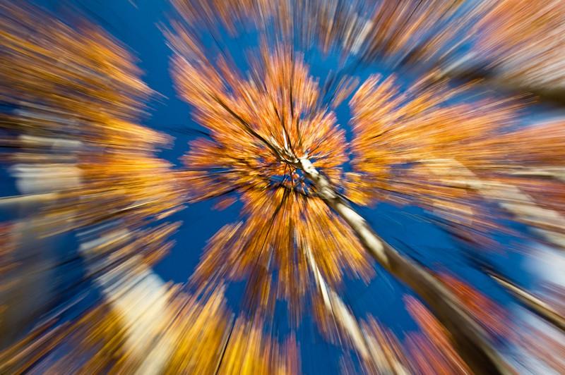 Aspens in motion