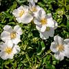 White flowers soaking up the sun shine