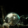 Clear glass light bulb has a hammerhead driven inside of the sphere