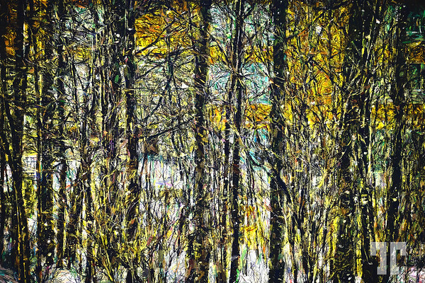 trees-OIL-PAINTING-ABSTRACT