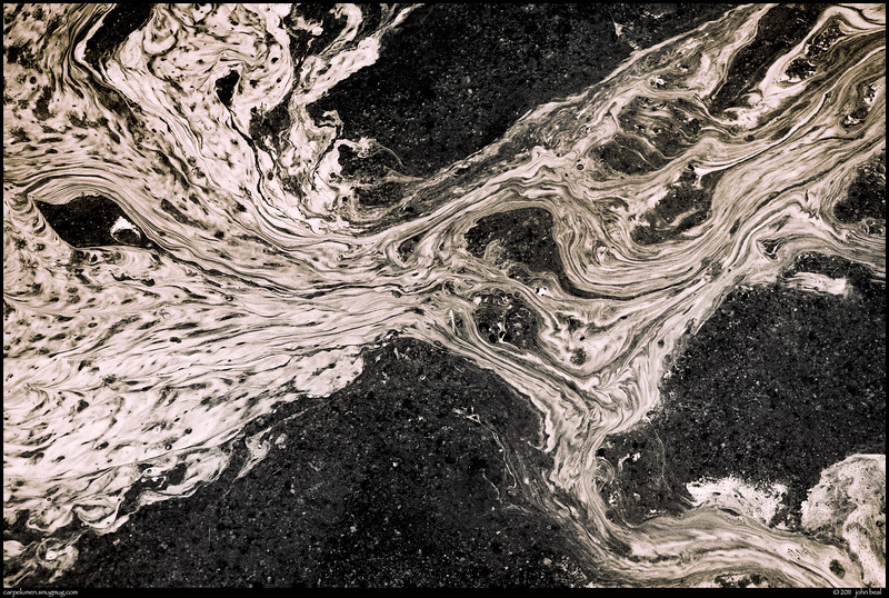 """(30Mar11)  pollen flow ii.  <a href=""""http://carpelumen.smugmug.com/Photography/2010/March10/11394055_8VU6F/1/825308454_Qd6eG/Medium"""">one year ago.</a>  f/8, 1/100s, iso 400."""